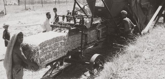 1956 - Fondazione Vitivinicola Bruni